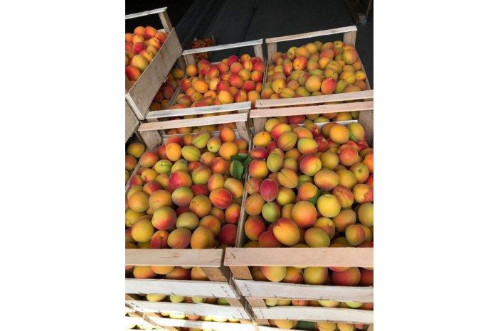Первая партия молдавских абрикосов и черешни доставлена в Германию