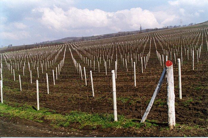Сумма запрашиваемых фермерами субсидий выросла на 35%